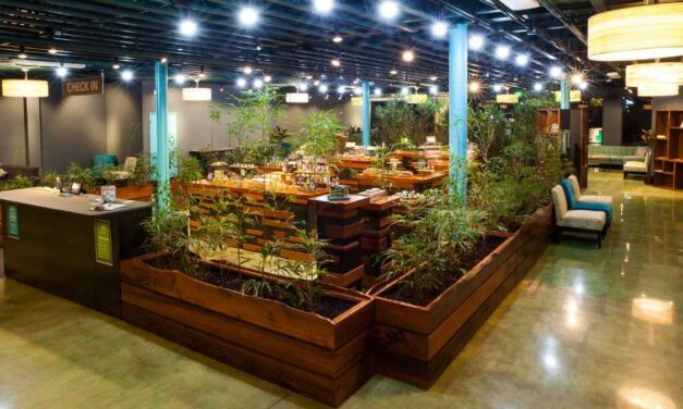 Top Significant Ways Cannabis Dispensaries Differ Across The US